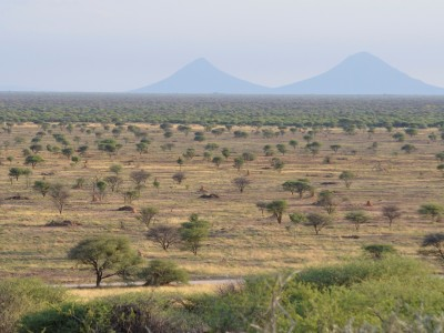 Namibia's bush business, converting back to savannas helps our economy (Guest Author: Asellah David)