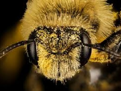 It's not only about the honey, bee
